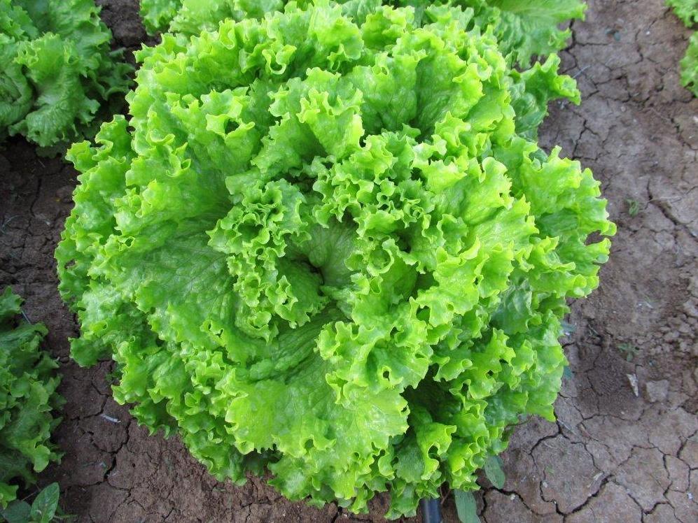 Салат с красной капустой майонез рецепт