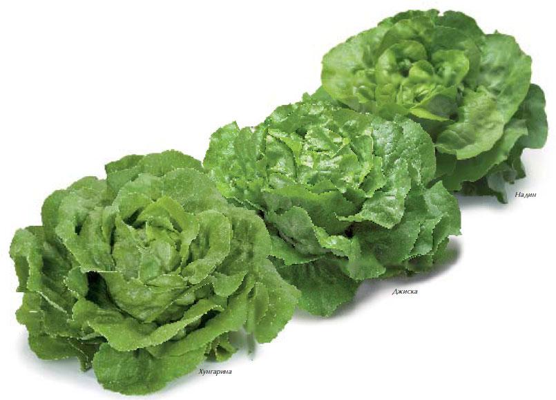 salat-maslo1