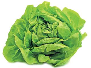 Салат кочанный маслянистый