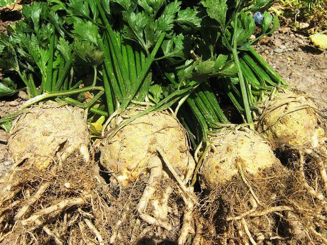 ЕЭК завершила формирование единой системы прогнозирования продовольственных рынков в ЕАЭС