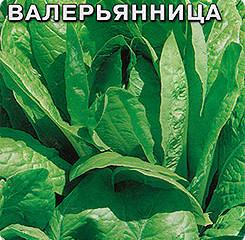 Салат полевой (валерьянница, рапунцель)