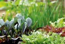 Выращивание трав