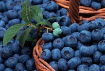 Выращивание ягод